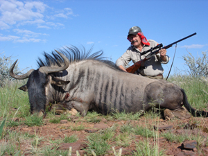 Namibia Hunting Trophy - Bull Blue Wildebeest
