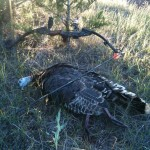 Oklahoma Trophy Turkey Bow Hunt